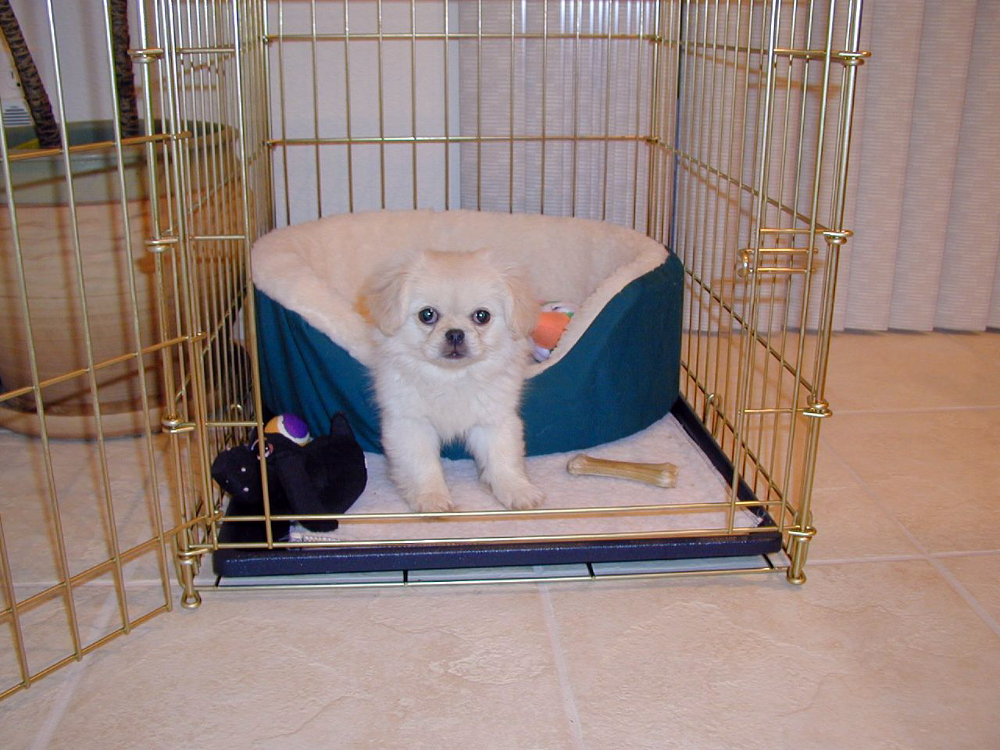 dog crate training