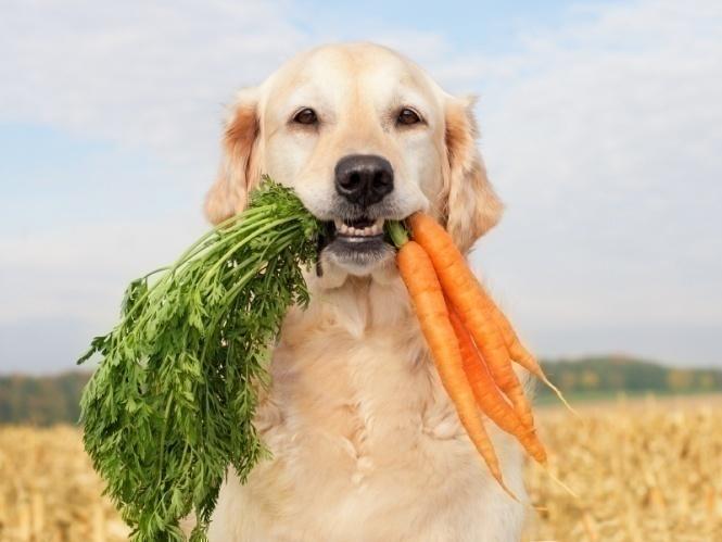 Vegetarian Dog Food