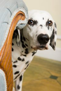 Best Treatments For Dog Anxiety