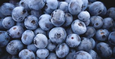 can rats eat blueberries