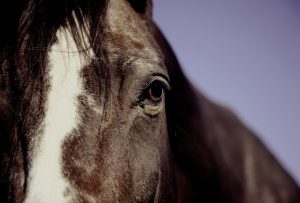 can horses see color