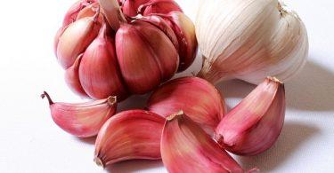 can cats eat garlic