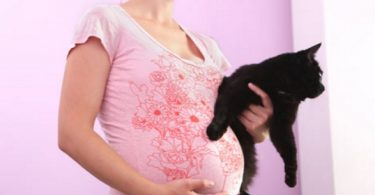 can cats sense pregnancy