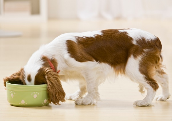 dog food coupons and deals