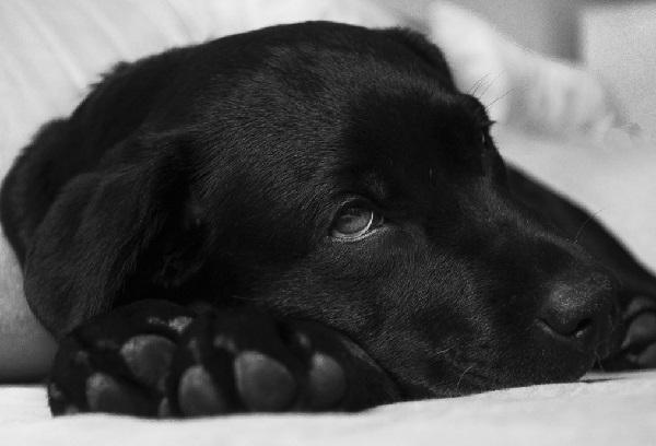novox for dogs