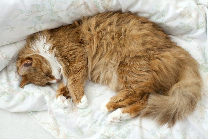 Cat Snoring