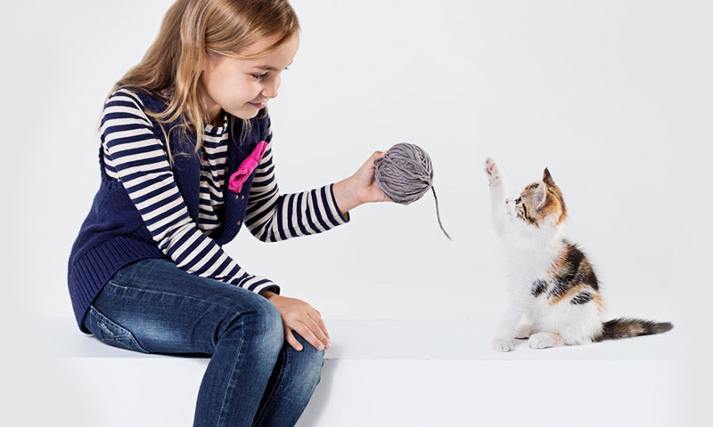 Best Cats For Kids With Allergies
