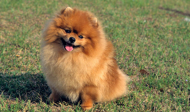 Top 10 Best Looking Dogs