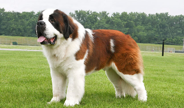 Top 10 Strongest Dogs