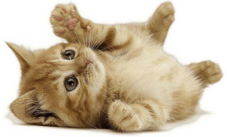 Top 10 Cat Names In 2017