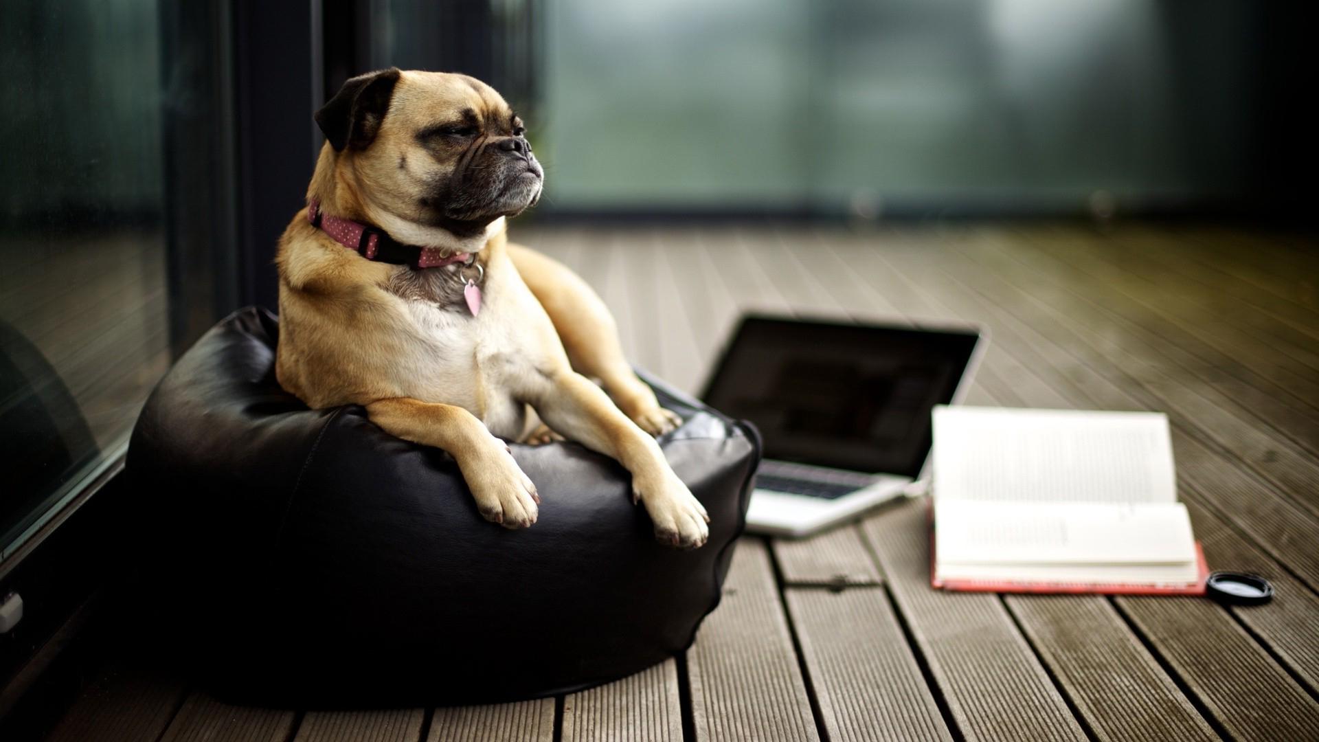 Top 10 Dog Blogs