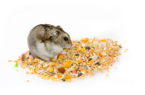 Can Hamsters Eat Cereal