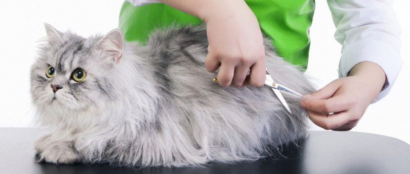 How To Groom Your Cat At Home