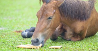 Can Horses Eat Bread