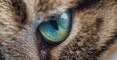 Cat Conjunctivitis Treatment Over the Counter