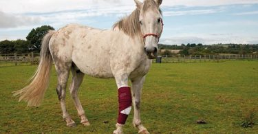 Common Horse Health Problems