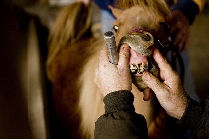 Horses Teeth Problems Symptoms