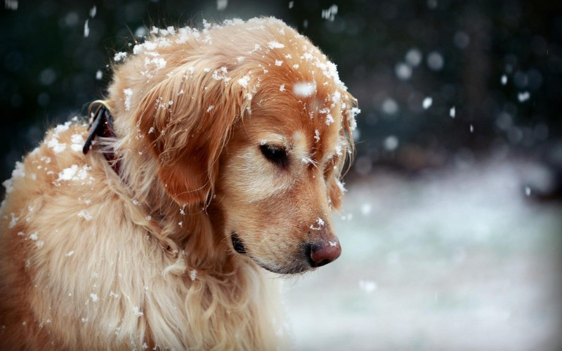 Tips For Dog Owners in the Winter