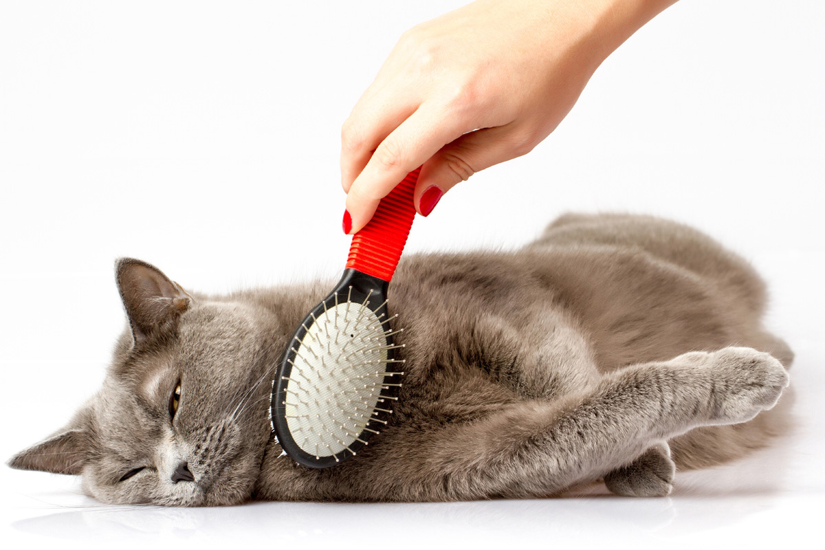 Top 10 Tips On Cat Grooming