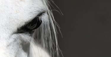 how do horses see