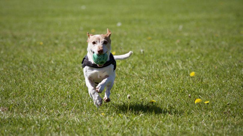 common dog behavior problems