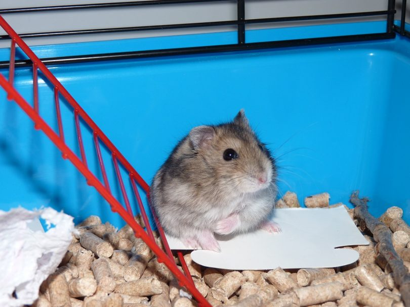 12 Diy Hamster Cage Projects To Completely Transform Your Pet S Home