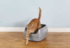 best Sifting Cat Litter Box