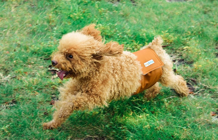 Best Belly Bands For Dogs