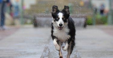 Best Dog Water Fountain
