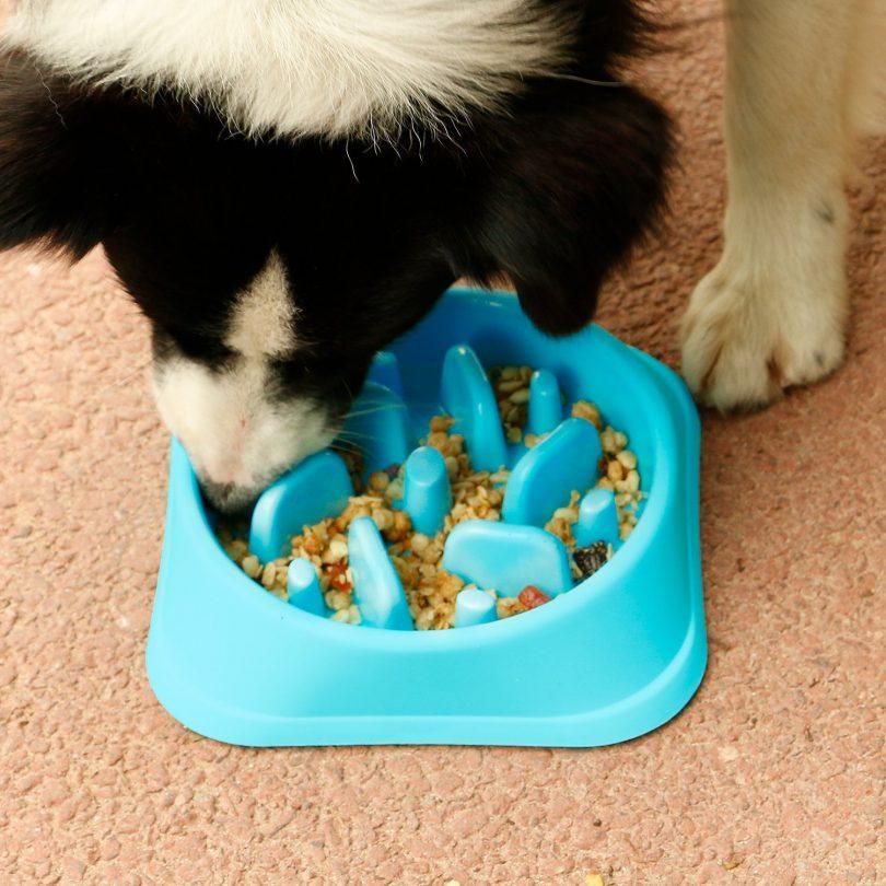 Best Slow Feeder Dog Bowl