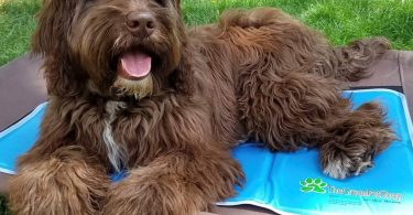 Cooling Pad For Dog