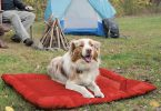 Best Outdoor Dog Bed